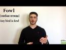 English Homophones: fowl vs foul