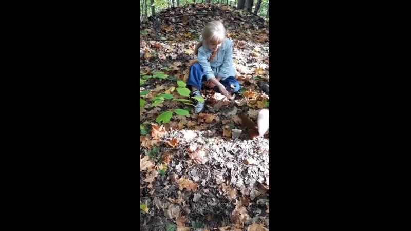 Кормим белок, осень 2020, Тольяттинский лес