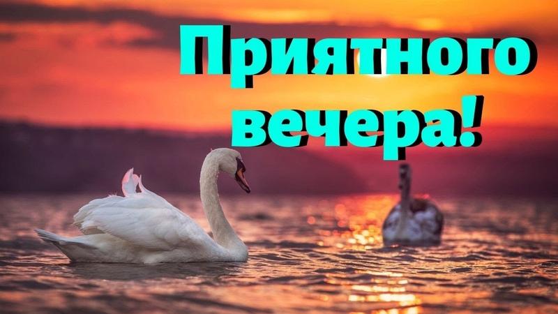 Желаю всем уютного и теплого зимнего вечера