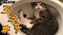 КОШКИ 2020 Смешные Кошки Приколы Кошками и котами Funny Cats 2020