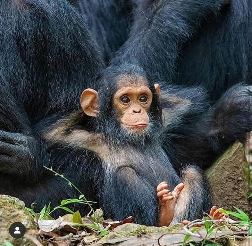 Александр Жданов: Добрый  вечер     #обезьянка
