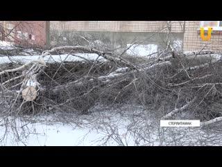 Жители Башкирии возмущены спилом деревьев во дворе дома. Они считают, что их подписи подделаны