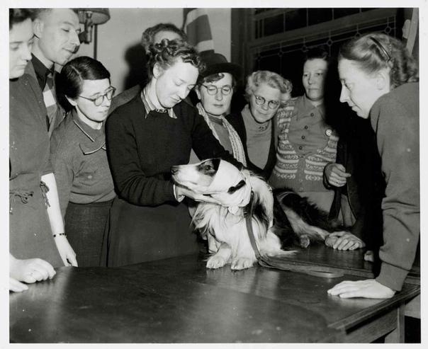Курсы для владельцев домашних животных по оказанию первой помощи своим питомцам