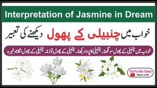 Interpretation of Jasmine in Dream Shaor Info    Khwab mein Chanbeli ke Phool dekhna Shaor info