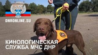 Кинологическая служба МЧС ДНР совершенствует навыки служебных собак