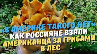 «В Америке такого нет».Как россияне взяли американца за грибами в лес.(рассказывает американец)