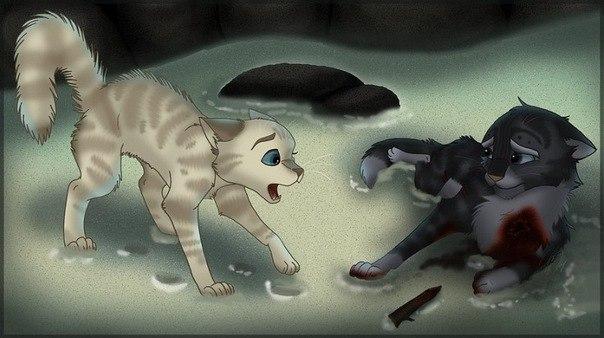 раненые коты воители картинки был первый энергонасыщенный