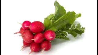 Редис.Секрет Выращивания Редиса.Как Вырастить Вкусный Редис?