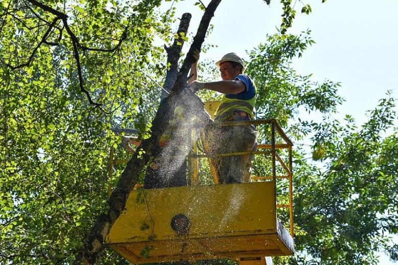 Во Фрунзенском районе провели опиловку деревьев