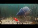 ПОКЛЕВКА КРУПНОГО ГИГАНТСКОГО КАРПА НА БОЙЛЫ - Реакция рыбы , подводная съемка 2021