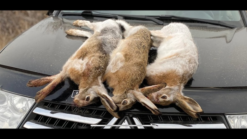 Три зайца на троих ОХОТА ПО ЧЕРНОТРОПУ Охота на зайца 2020 2021