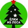Живые новогодние елки Нижний Новгород