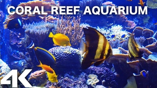 AQUARIUM 4k coral reef 4K with water sound. 10 Hours for Meditation Relaxation Sleeping #RELAXTIME