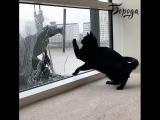 Кот и мойщик окон