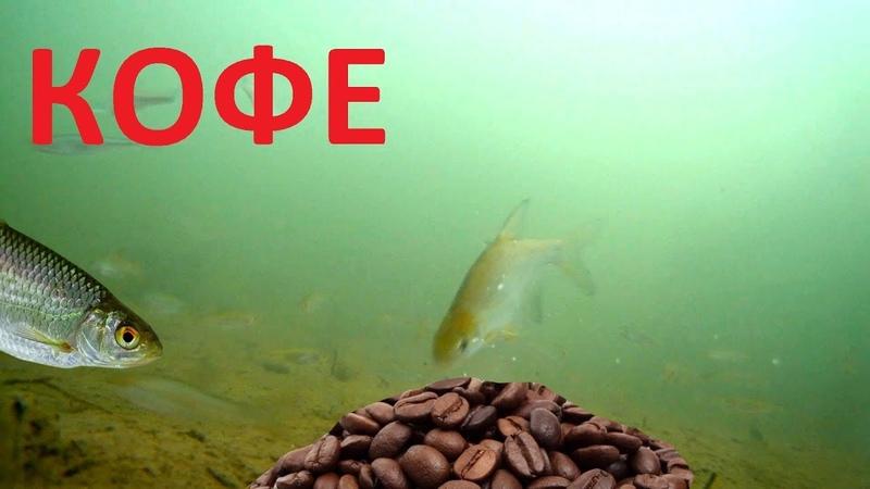 Реакция рыбы на КОФЕ! Вот это открытие! Подводная съемка