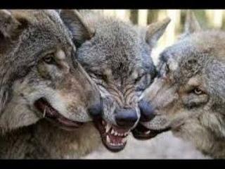 Серьёзный фильм ДЕД: Повелитель волков --- Serious film FATHER: Lord of the wolves