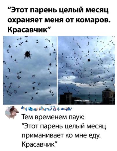 """паук ловит еду """"на жильца"""""""