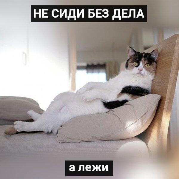 Заряд мотивации от котиков