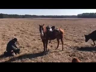 Лошадь не подпускает корову.mp4