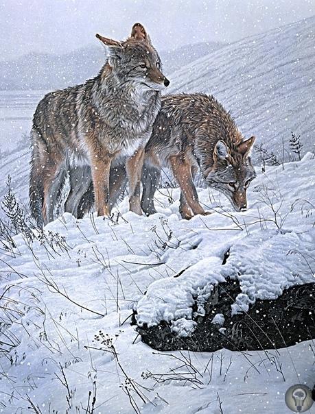 Животный мир художницы Бонни Марис.