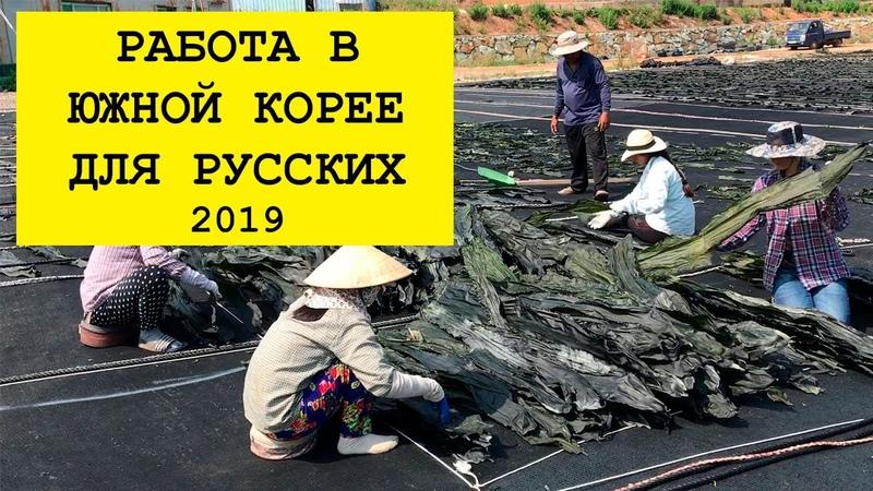 Работа в Южной Корее для русских 2019. Как поехать работать и стоит ли Инструкция новичкам.