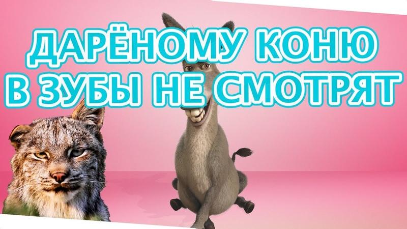 Дарёному коню в зубы не смотрят или Т 45 WOT DMITRYCH