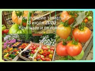 Мои лучшие томаты 2020  Крупные, вкусные, самые ранние 13 июля Собираю урожай уже ящиками