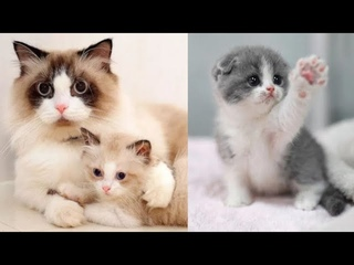 Super cute kittens || Worlds most Cute and Funny Kittens || Part 2