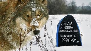 ВОЛЧЬЯ ДЕРЕВНЯ - Рождество в Чернобыльской зоне | Film Studio Aves