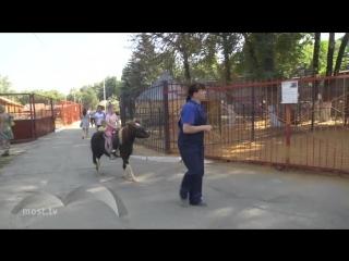 Территорию Липецкого зоопарка планируют расширить