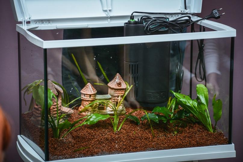 В Православной гимназии 03.12 прошел мастер класс по уходу за аквариумом с живыми растениями и рыбками!, изображение №12