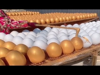 This is my first time seeing this egg factory. I was shocked.