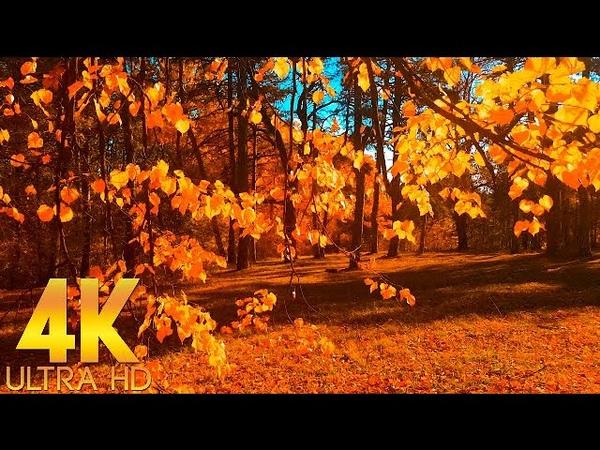 ОСЕНЬ ВЛЮБЛЕННАЯ В ГРУСТЬ Красивые Осенние Пейзажи Видео для Релакса и Отдыха в 4K Ultra HD