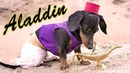 Ep 11 CRUSOE THE MAGIC LAMP If Your Dog Had 3 Wishes What Would They Be?!