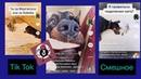 Из ТикТок Смешное Забавные Собаки и Коты From Tiktok Funny Funny Dogs and Cats