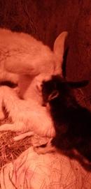 У нас радость 🎇💞🐐Наша Майка родила 3х чудесных козочек 😊💓 скоро можно будет пообщаться с малышами) д