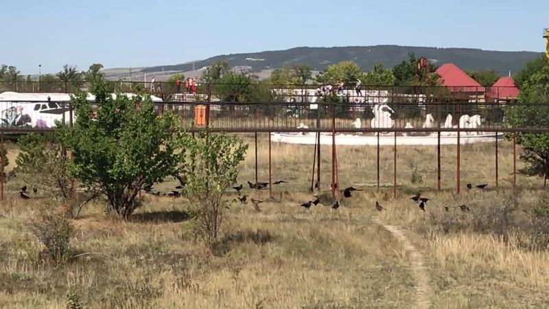 Пир ворон Тайган Feast of the crows Taigan Safari Park Crimea