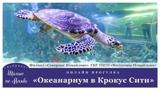 """Филиал «Северное Измайлово» """"Шагаю по Москве"""" в Океанариум Крокус Сити."""