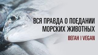 КАК МЫ УНИЧТОЖАЕМ ОКЕАН? || Убийство рыб и чувство боли