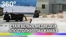 Белые медведи «подтолкнули» Камаз из сугроба в Якутии