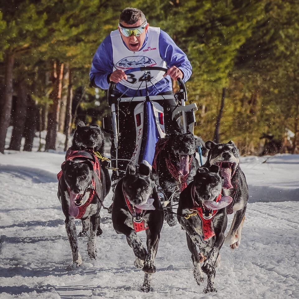 Афиша Тюмень ЧиП УрФО по Ездовому Спорту 2020