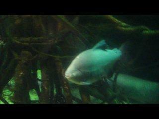 Японский ОКЕАНАРИУМ 3 по величине в мире - огромные рыбины