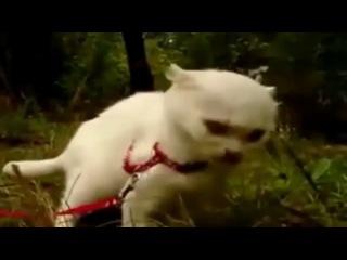 Очень забавный котик