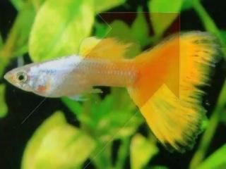 Жизнь с животными.Аквариумные рыбы.Часть1