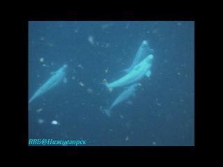 BBC Чудеса живой природы 1 Великие путешествия Документальный 1996