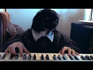 Собака Октопуса не имеет музыкального слуха но её это совершенно не парит