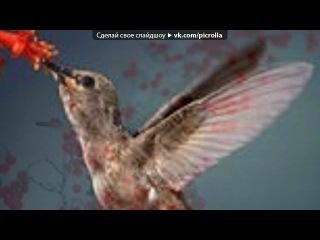 «Птички» под музыку Саёра Сафари - Птичка певчая, лети, Забери мои печали! Птичка певчая, найди его, скажи, Что я люблю, Что я о нём скучаю!Молчи, сердце, молчи, От всех прячь мою боль. Кричи, сердце, кричи! Когда встретишь любовь.. Picrolla