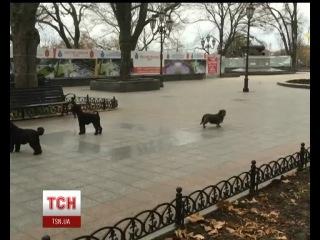 В Одесі собаки заспівали гімн міста