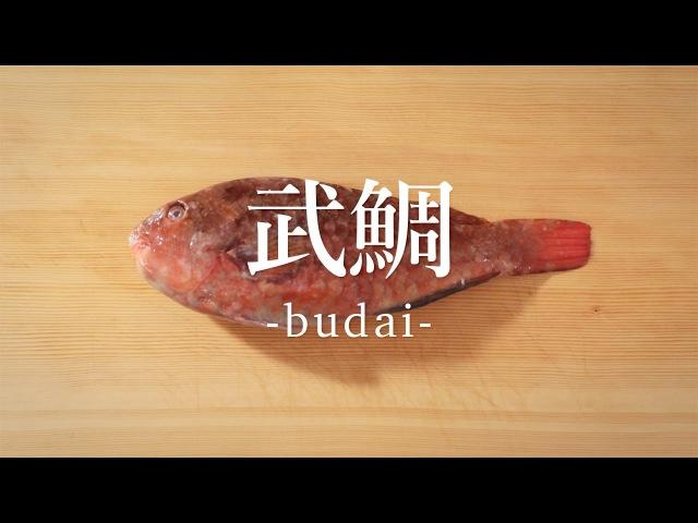武鯛(ぶだい)のさばき方 - How to filet White-spotted Parrotfish -|日本さばけるプロジェクト