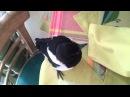 Töltött szarka stuffed magpie